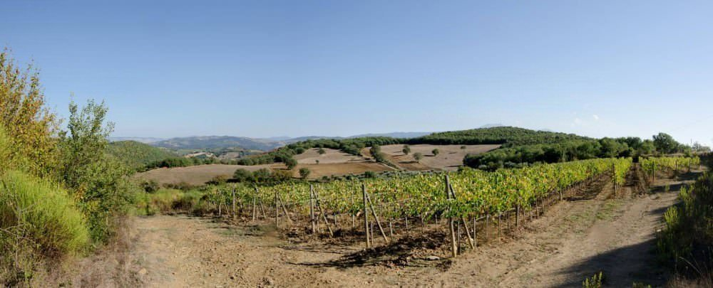 Winery farm in Montalcino